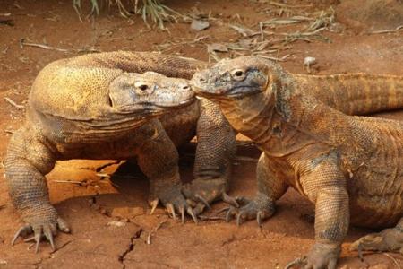 Исчезновение крупных тропических животных окажет негативное влияние на климат
