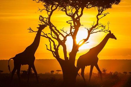 День освобождения Африки и современные проблемы континента