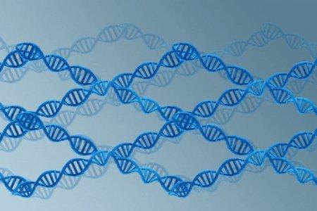 Биохимики сделали большой шаг к созданию ДНК-компьютеров