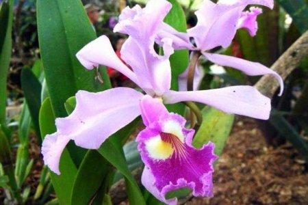Куба: орхидеи цветут круглый год