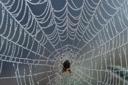 Ученые создали сверхпрочный аналог паутины, на 98% состоящий из воды