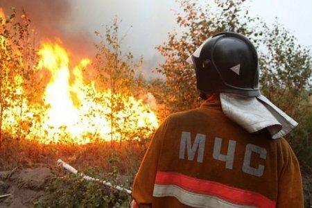 Уральские ученые разработали мину-огнетушитель для борьбы с лесными пожарами