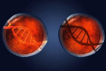 Ученые впервые «отключили» ген в эмбрионе