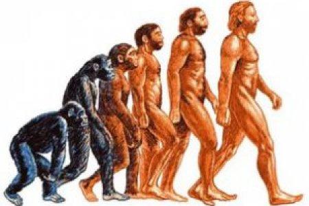 Опровергнуто одно из ключевых представлений об эволюции