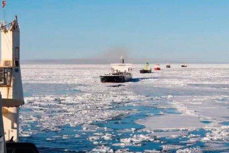 Тюменские ученые создали экологичный материал для строительства дорог в Арктике