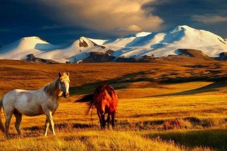 Монгольский мир и Россия: евразийский диалог