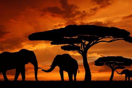 Трагедии  и надежды современной Африки