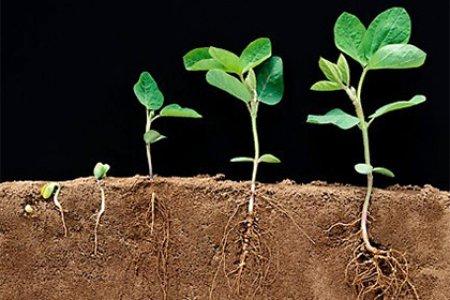 Генетики из Испании заставили растение круглосуточно расти