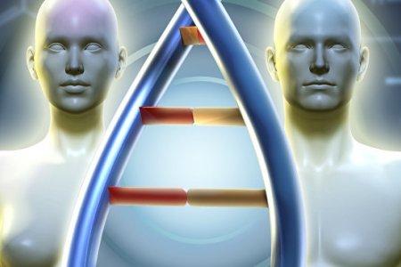 Ученые рассказали о деградации мужской хромосомы