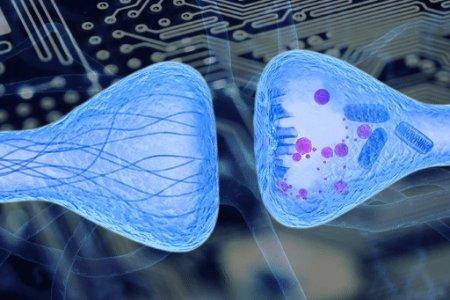 Ученые создали лекарство от мышечной слабости