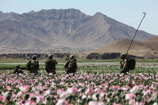 Россия и Афганистан сегодня: правда и вымыслы