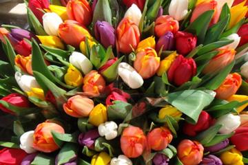 Картинки по запросу картинки тюльпаны