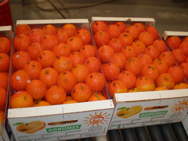 Знакомый по российским магазинам вид марокканских апельсинов