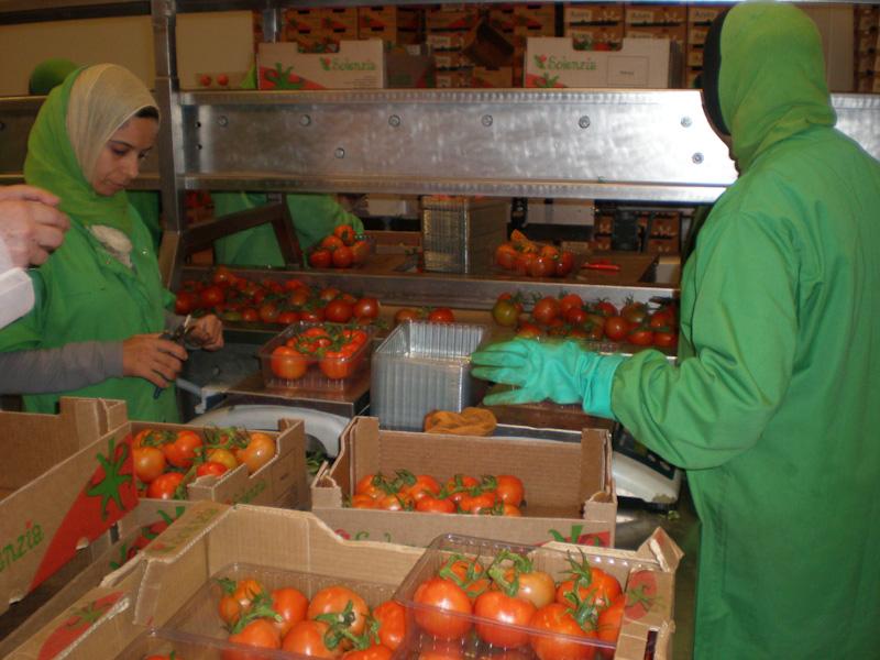 Расфасовка томатов